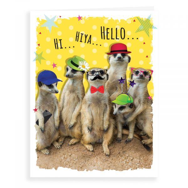 Blank Card, Meerkats