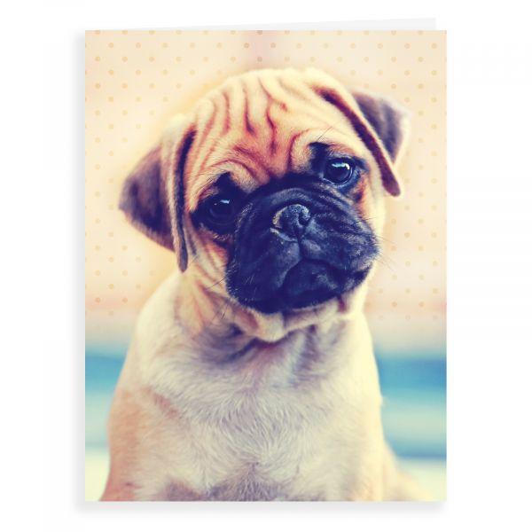 Blank Card, Pug