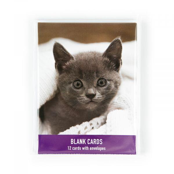 Blank Pack Kitten
